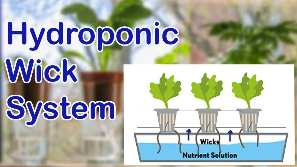 Wick Hydroponic System